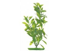 Rostlina  UH 18cm (Hydrophila )