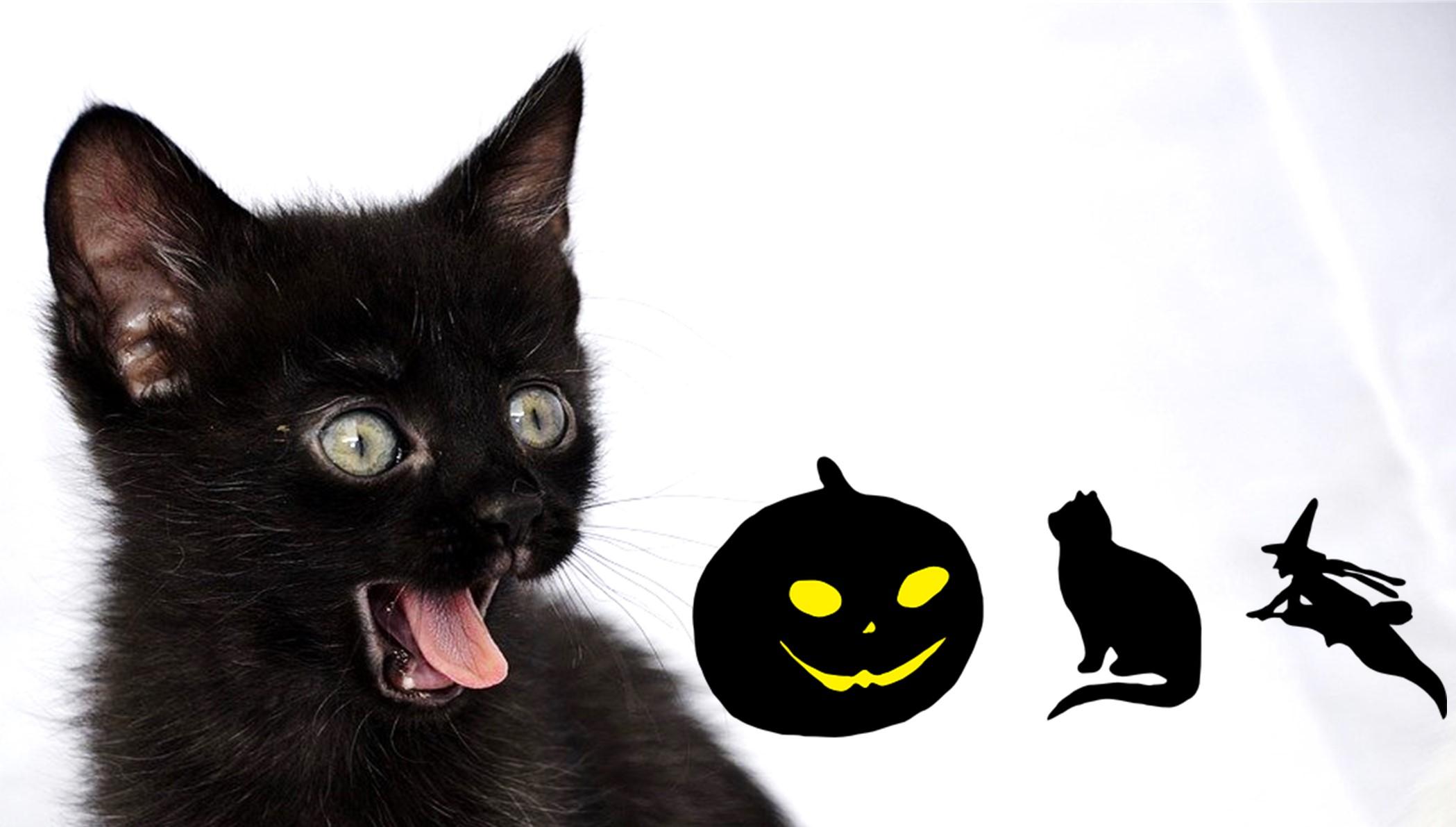 Černé kočky a jejich nejen říjnové trable.