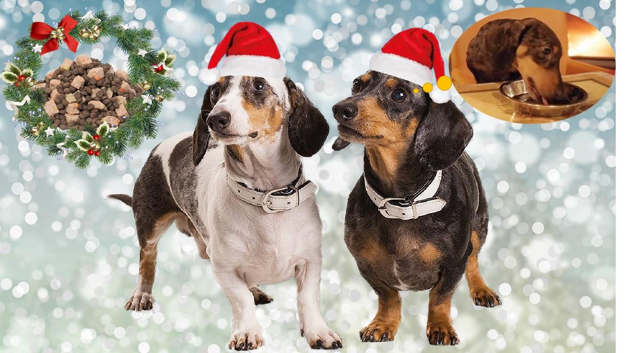 Jak vybrat vánoční menu pro pejska?