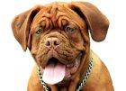 granule pro starší psy, nebo s nadváhou