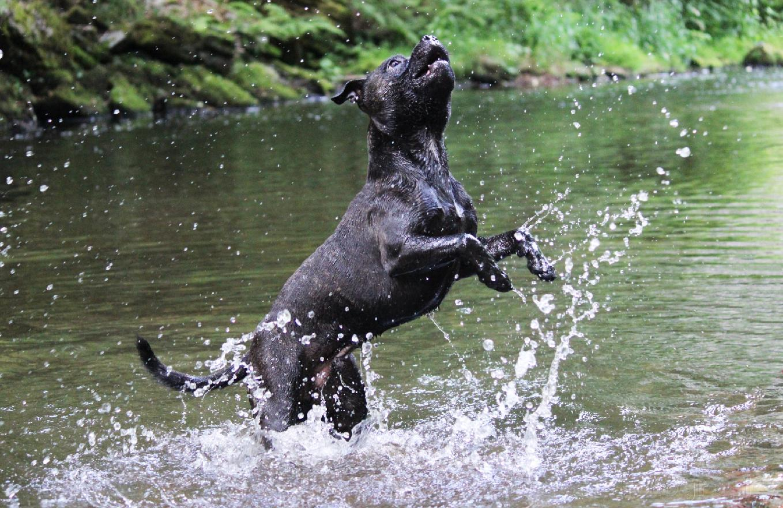 otrava psa vodou