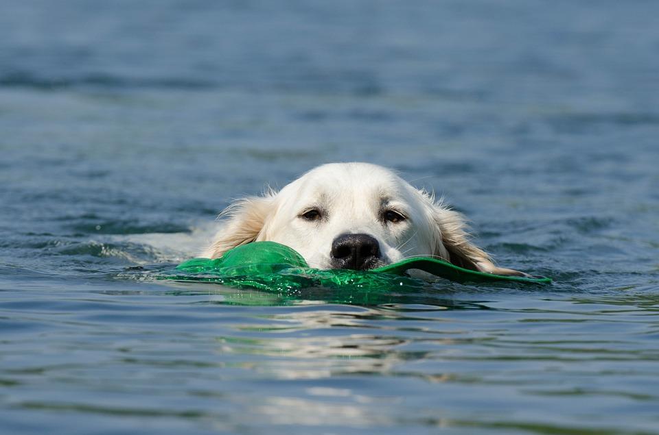 hračky do vody pro psa