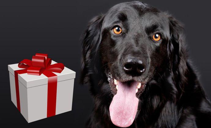 dobroty-pro-psa
