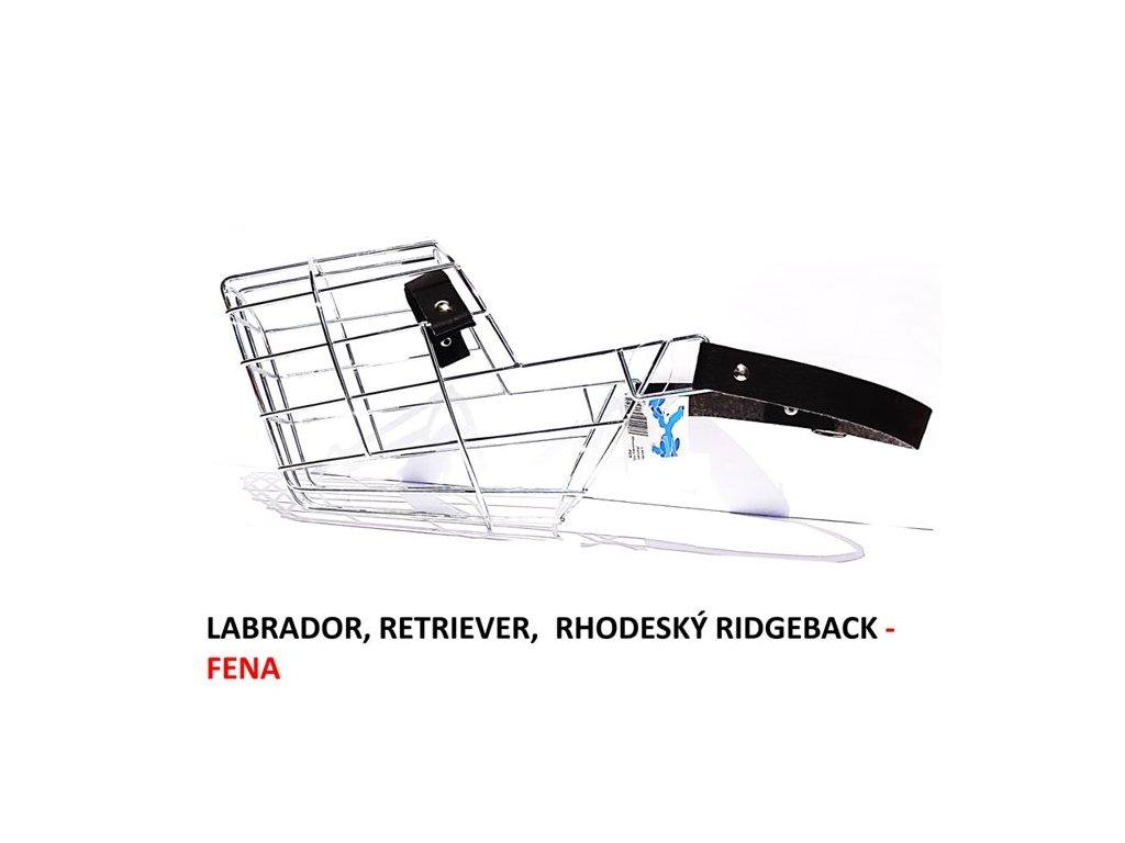 nahubek-kovovy-labrador--retriever--rhodesky-ridgeback-fena