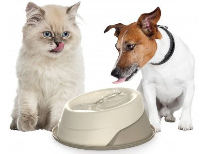 fontánka pro psy a kočky record