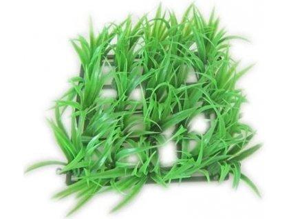 414 akva rostlina rost 13x13cm 1ks